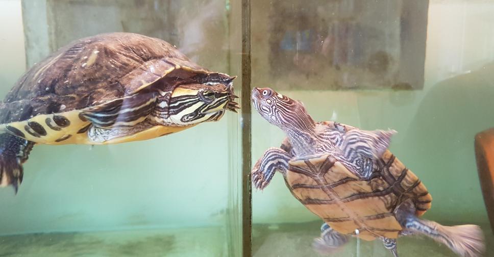 Sponsor Schildpaddenopvang NL